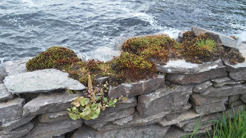 Irland Glenbeigh See Mauer Kopie